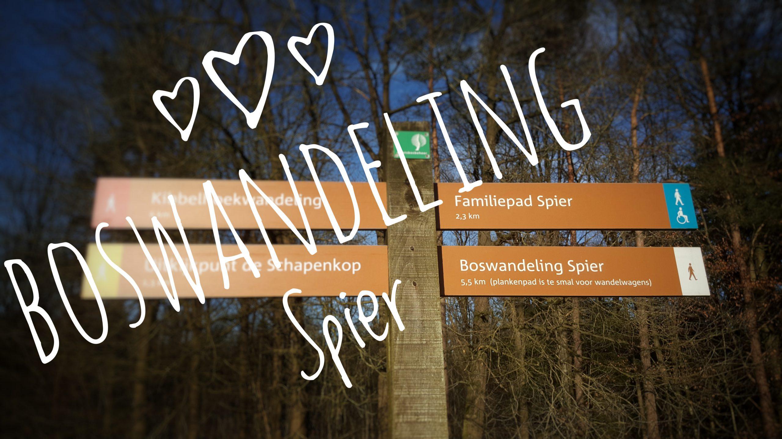 Wandelroute Boswandeling – Dwingelderveld