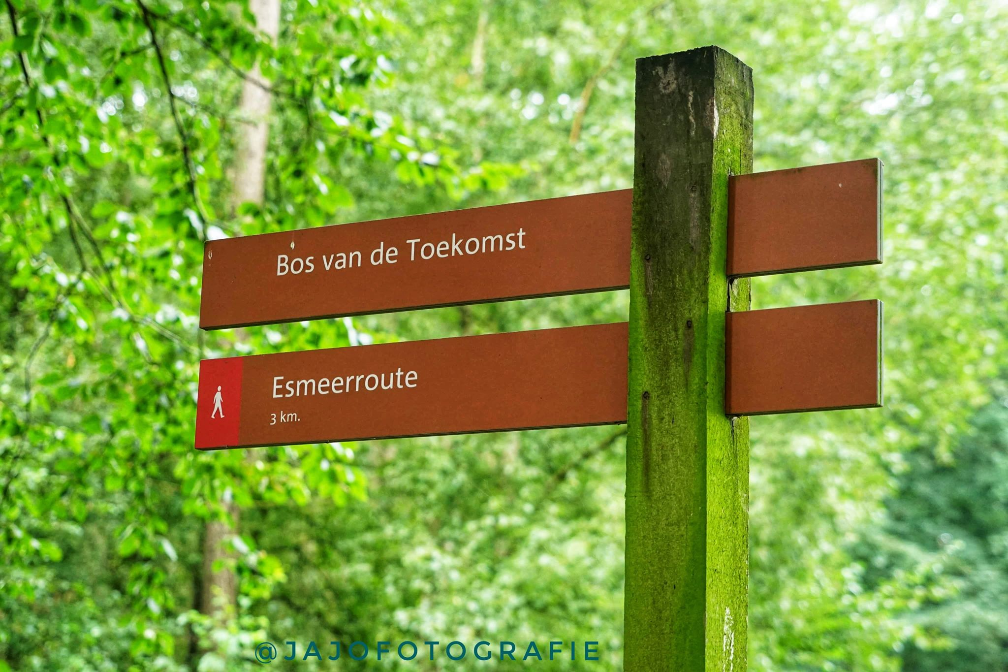 Esmeer – Bos van de toekomst